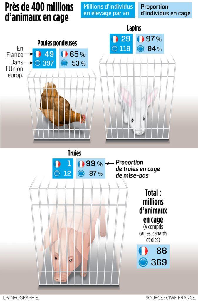 Infographie élevages en cages en Europe