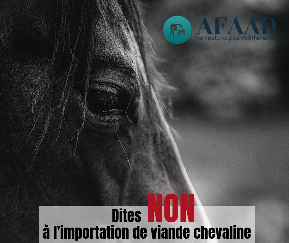 Import viande chevaline AFAAD