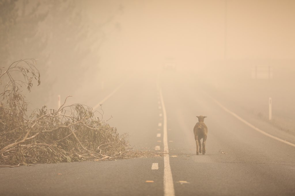 Rescapé des incendies en Australie